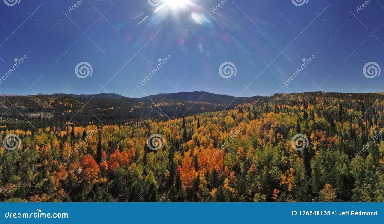 Färgrika Colorado bergträd i hösten