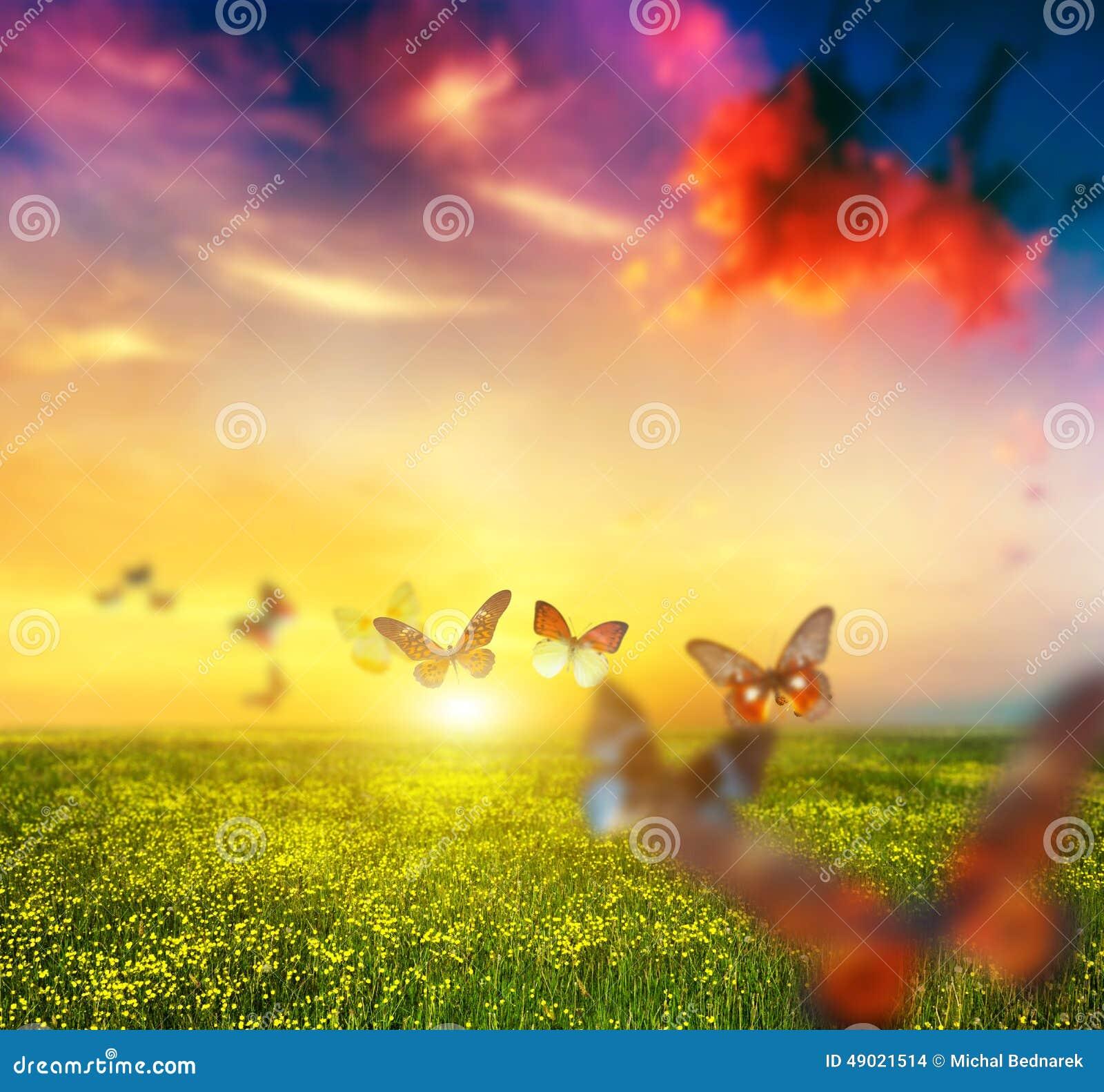 Färgrika fjärilar som flyger över våräng med blommor