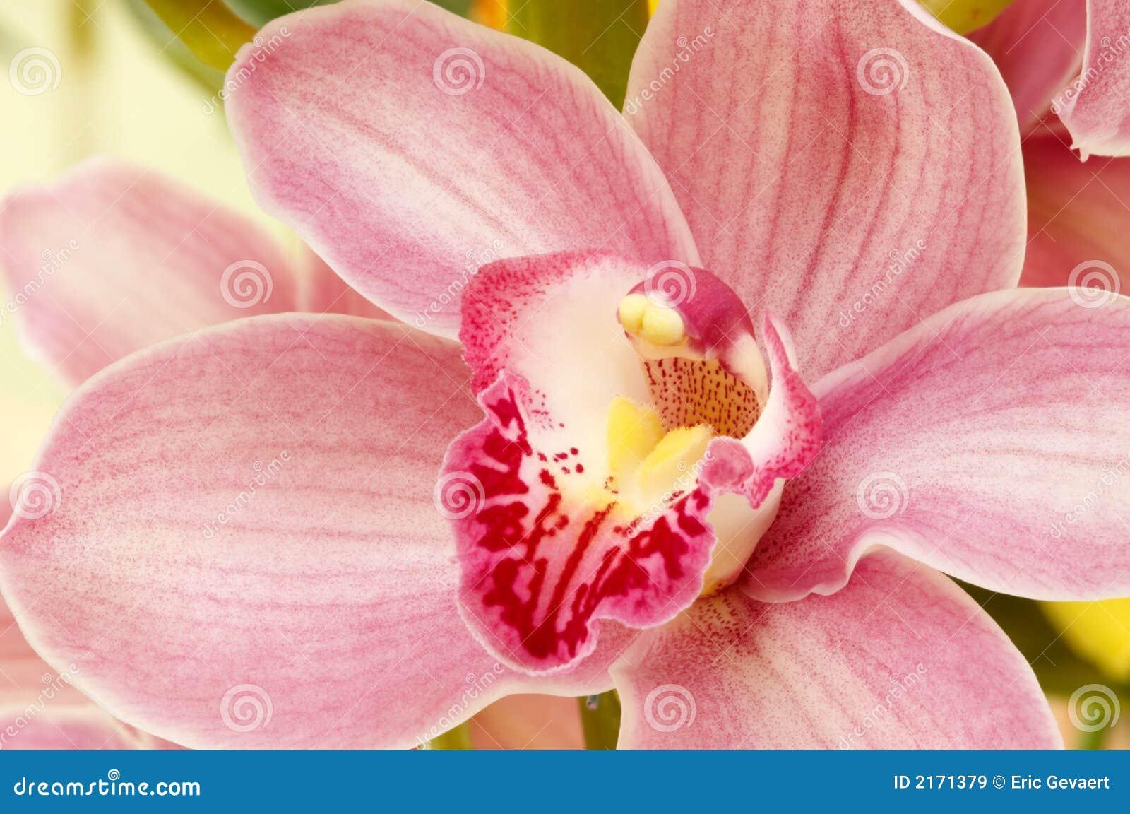 Färgrika orchids