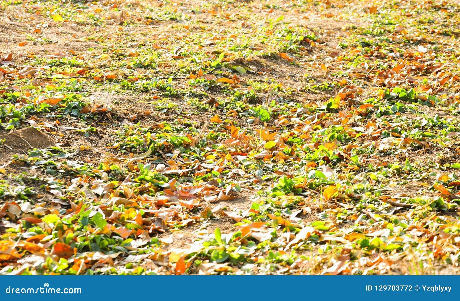 Färgrika sidor i höst på jordningen