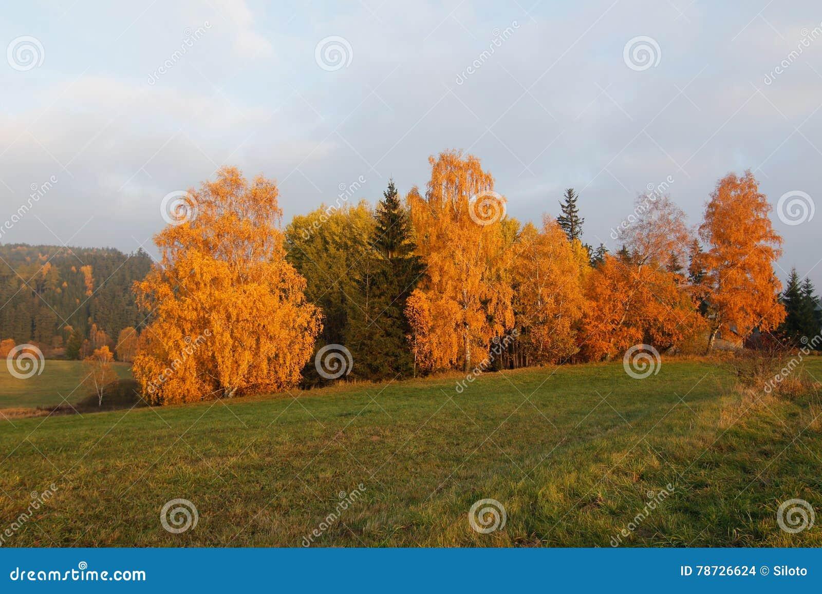 Färgrika trees för höst