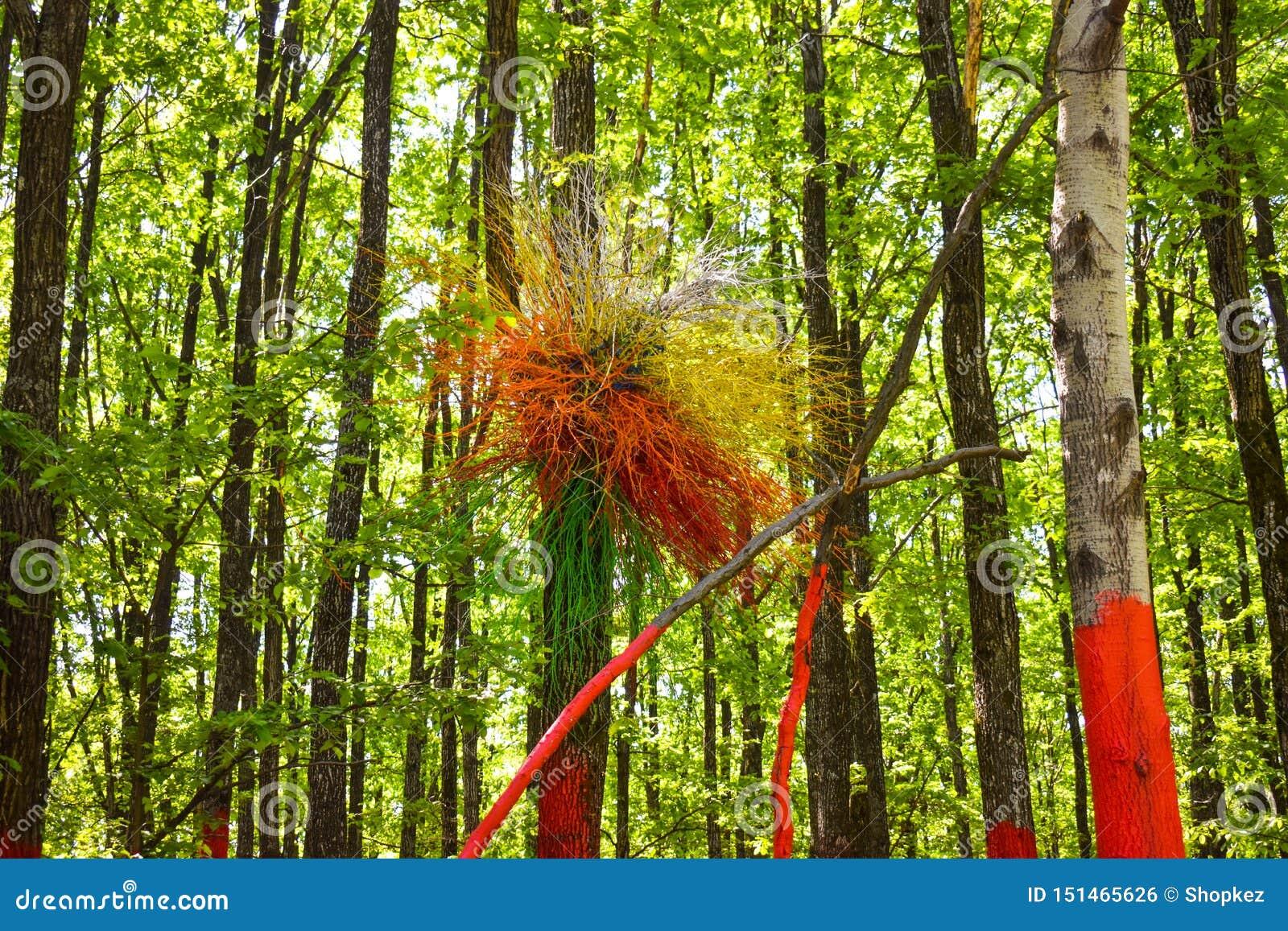 Färgrikt rede på det målade trädet i den färgrika skogen eller Padurea Colorata från Poienari, Rumänien