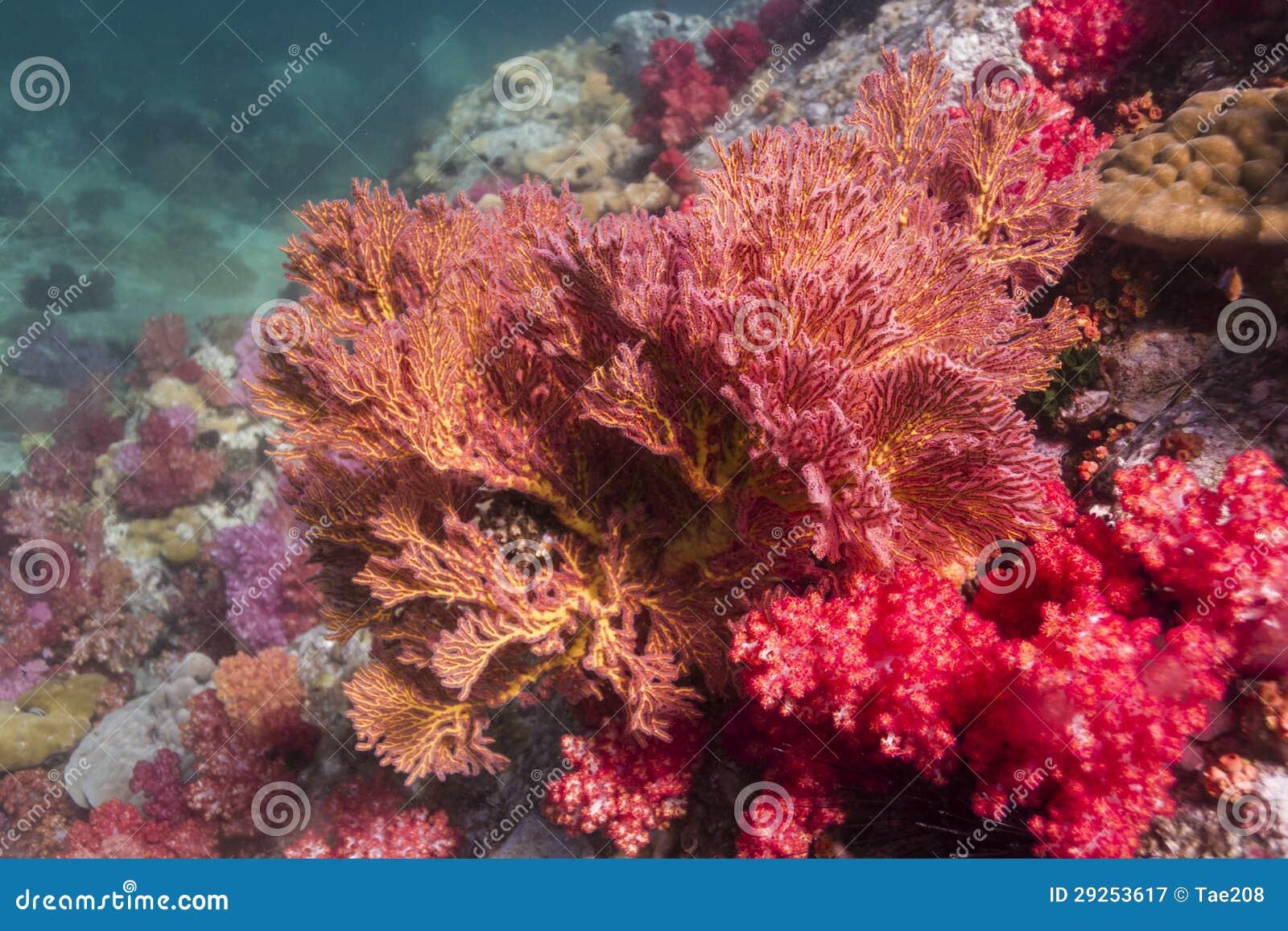 Färgrikt seafan på den Lipe ön