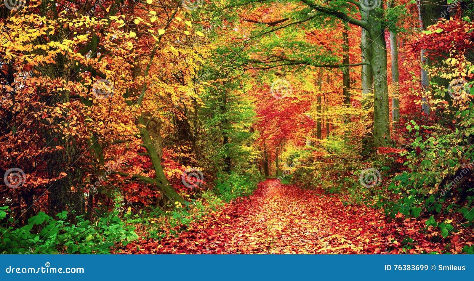 Färgrikt skoglandskap i höst