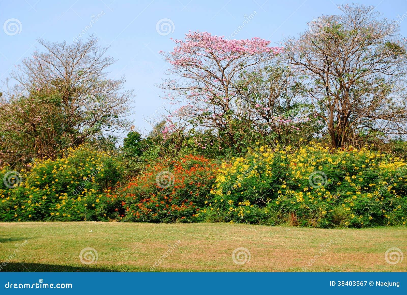 Färgrikt träd