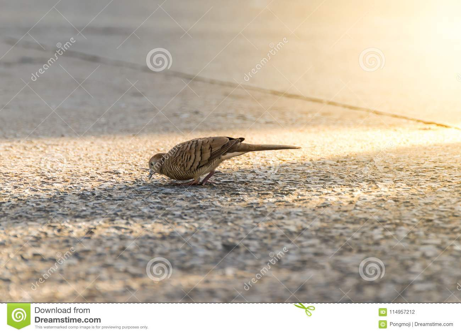 Fågel (duva, duva eller Disambiguation) i en stad