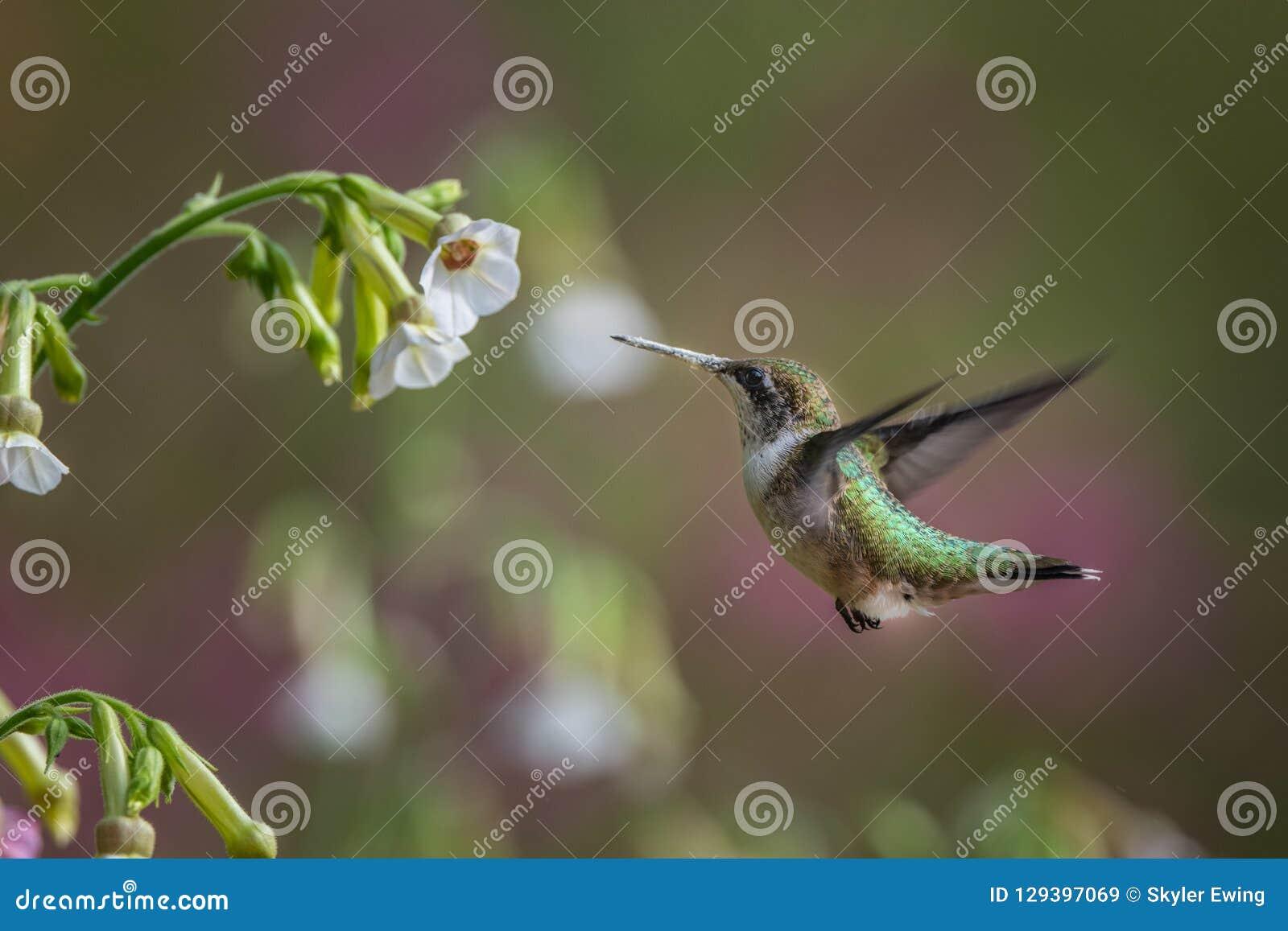Fågel i natur