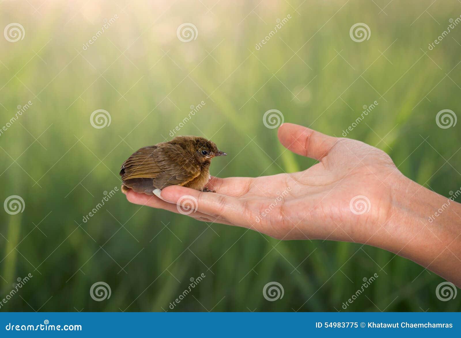 Fågel på en kvinnahand