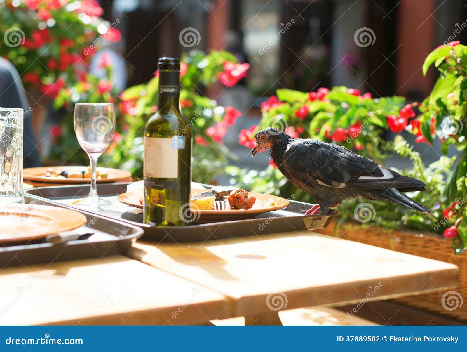 Fågel på en tabell som äter rester från plattor