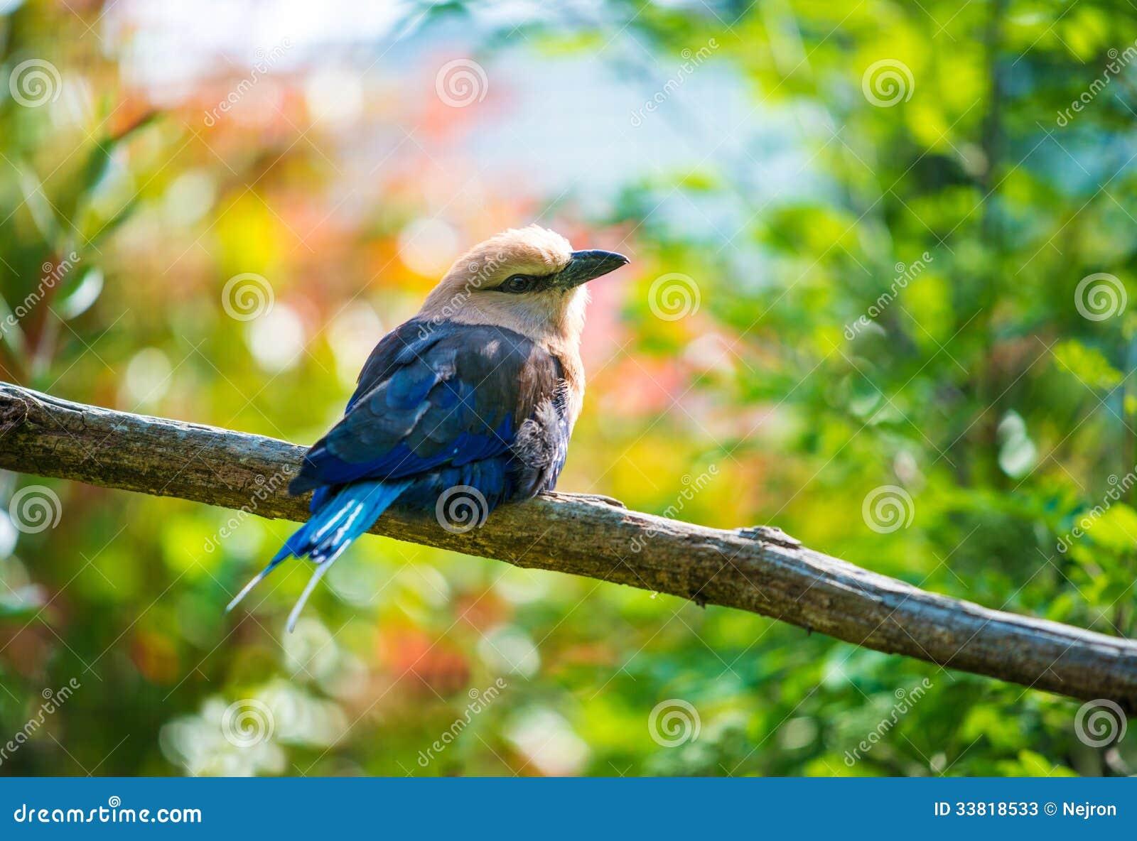 Fågel på ett träd