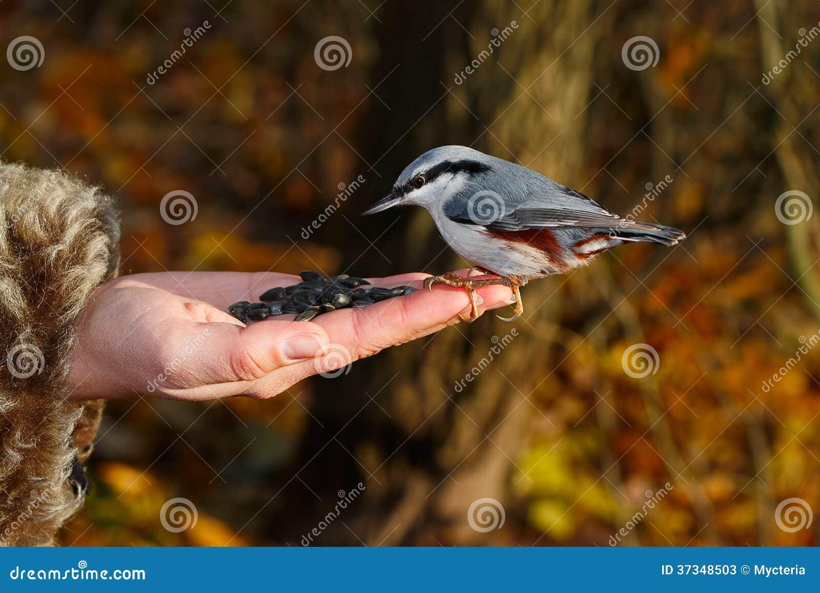 Fågel på handen