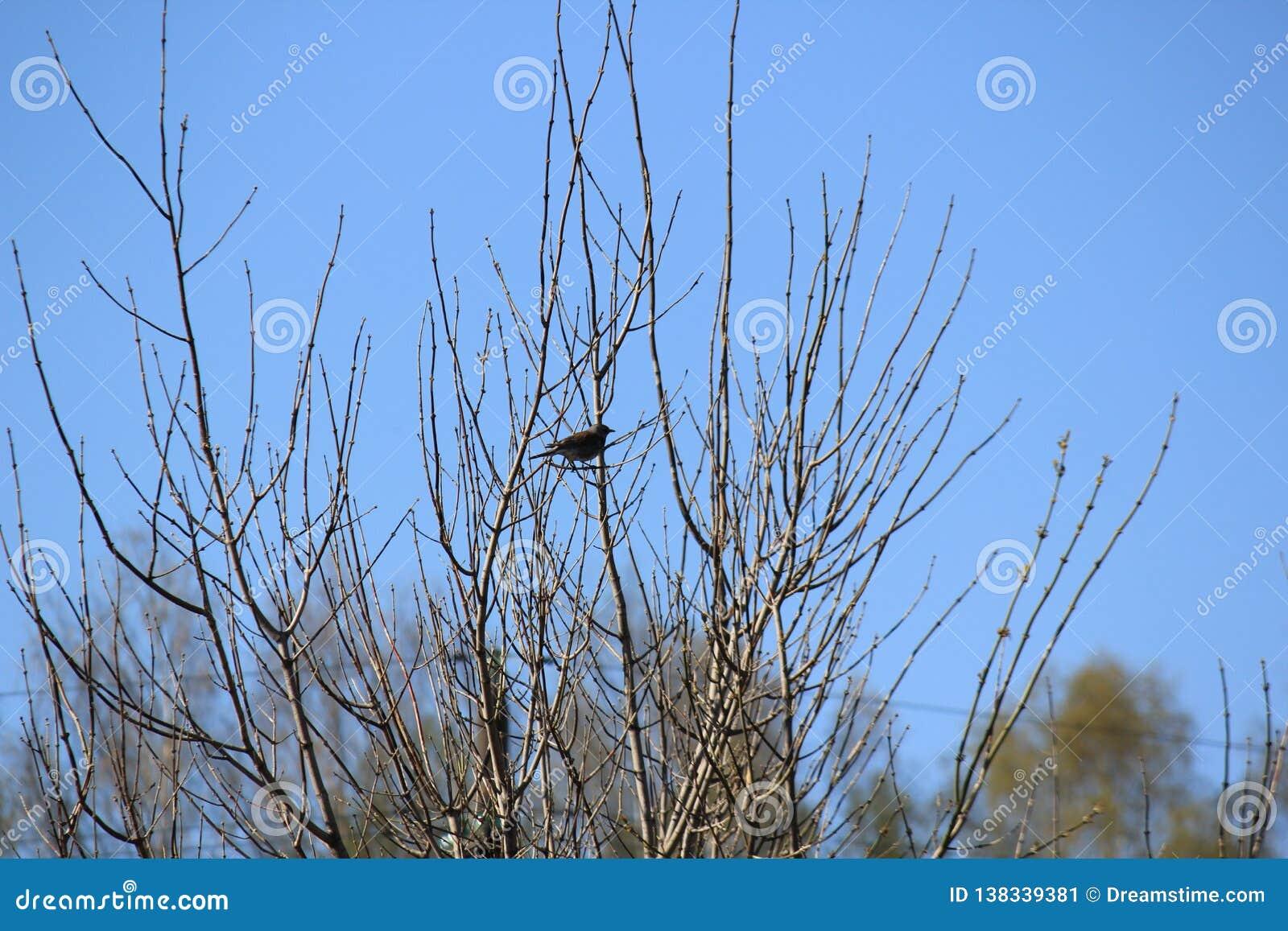 Fågel på Tree