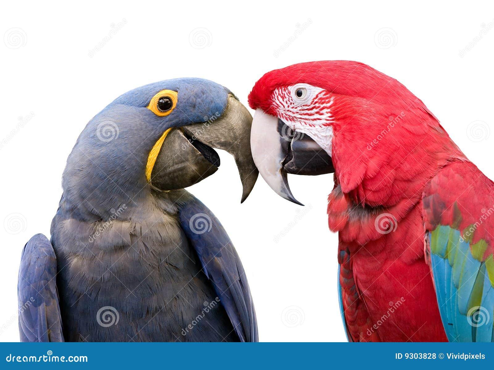Fågelförälskelse