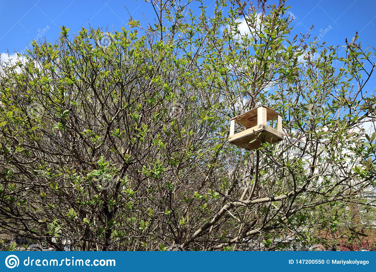 Fågelförlagematare träenkel överst av trädet i sommar