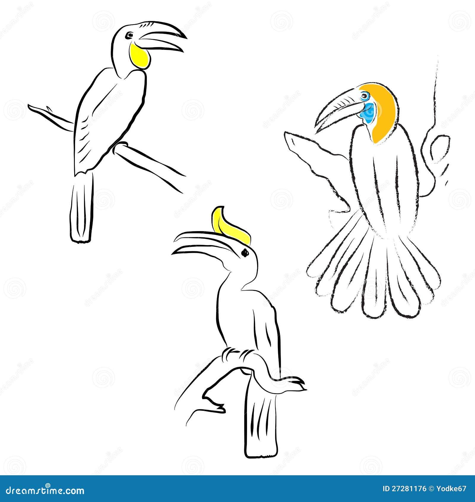 FågelHornbill
