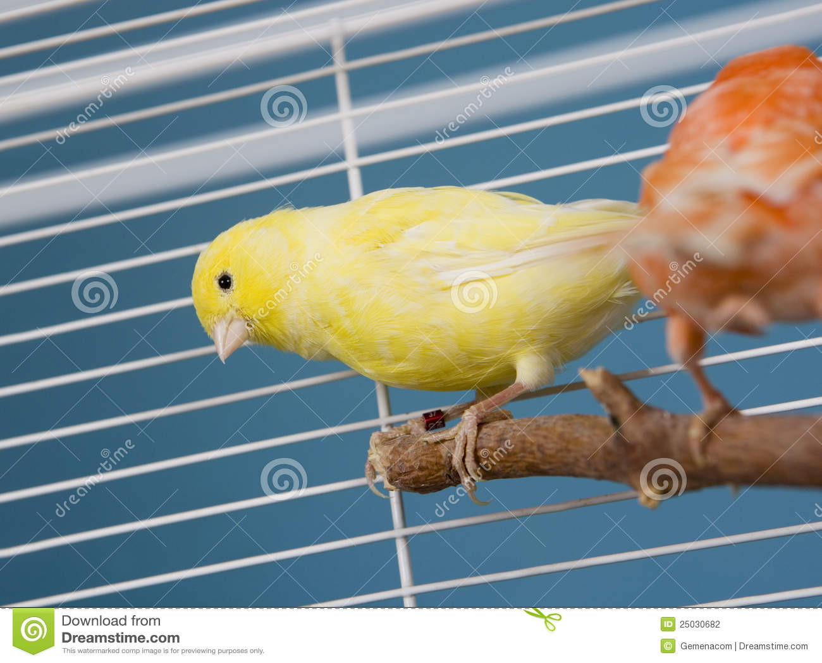 Fågelhusdjur