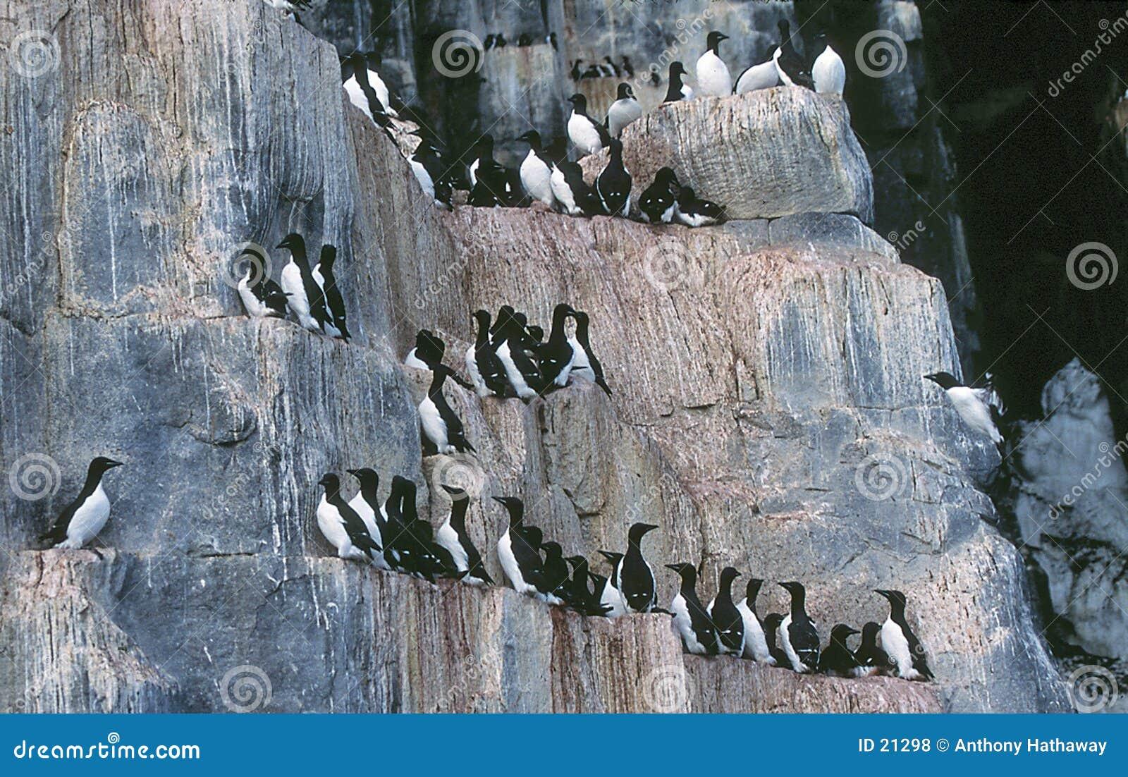 Fågelklippor