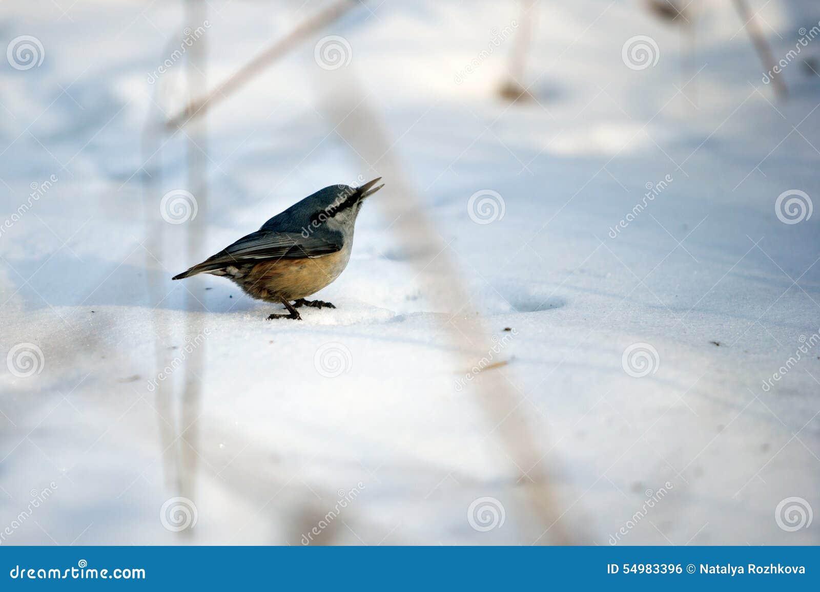 Fågelkornknarr