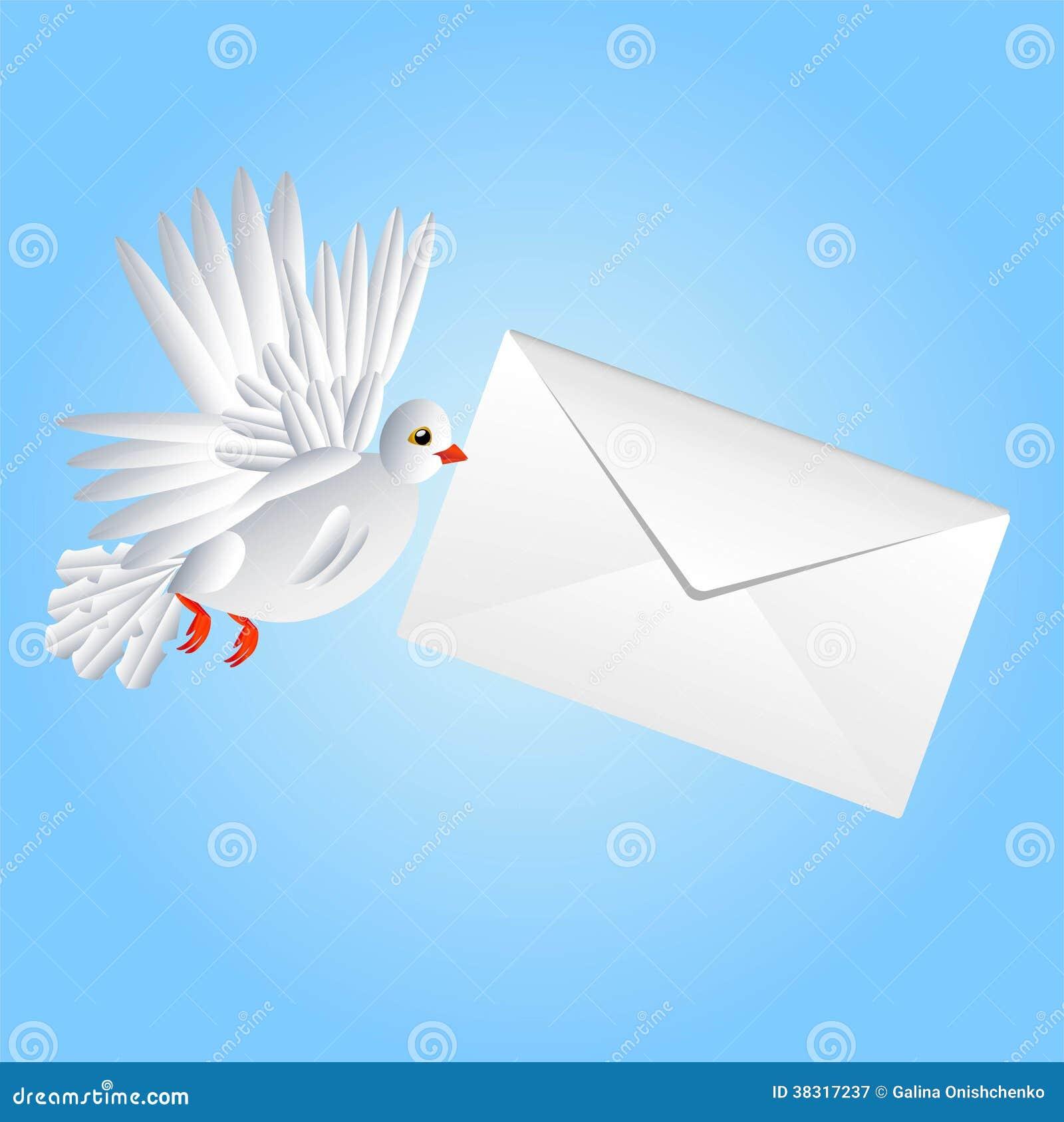 Fågeln en vit duva bär ett vitt kuvert i en näbb