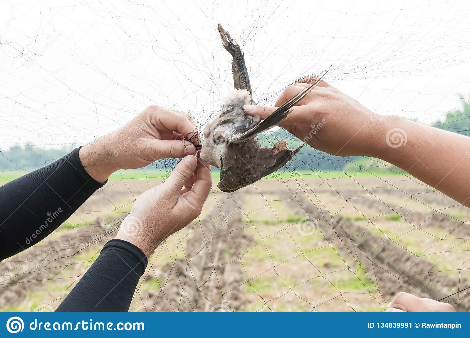 Fågeln fångades av trädgårdsmästarehanden som var hållande på ett ingrepp på vit bakgrund