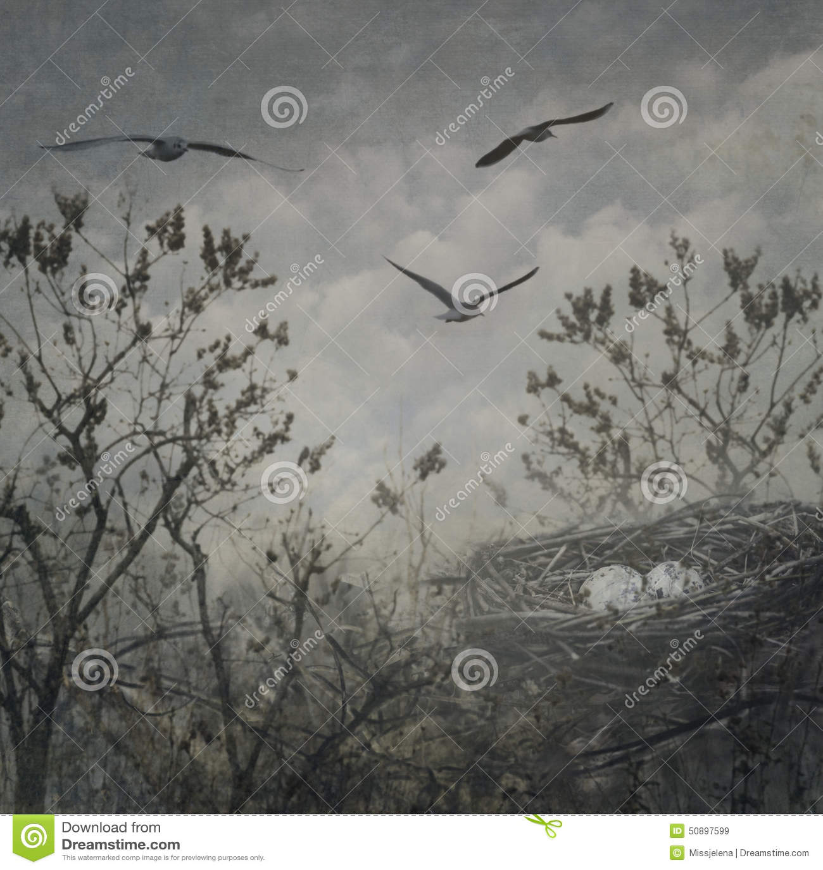 Fågelrede