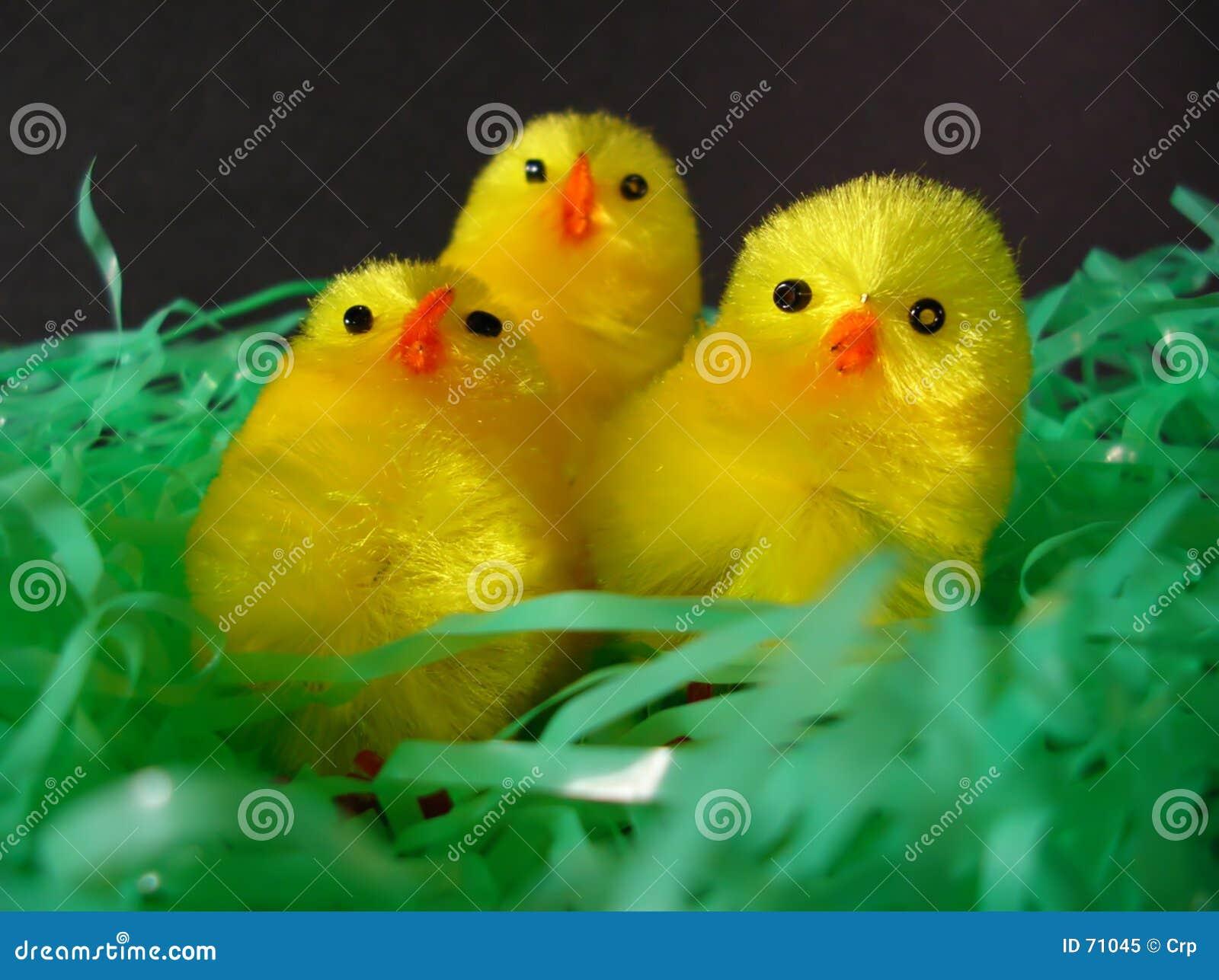 Fågelungekör tre