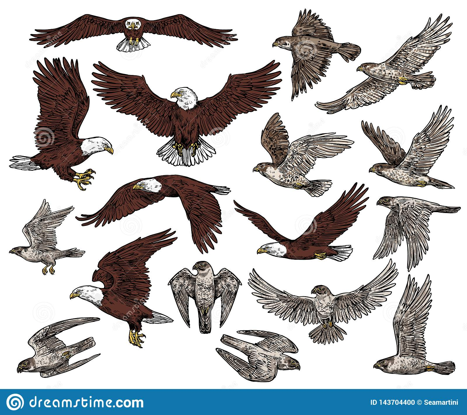 Fåglar av rovet, den rov- örnen och hökfalkar
