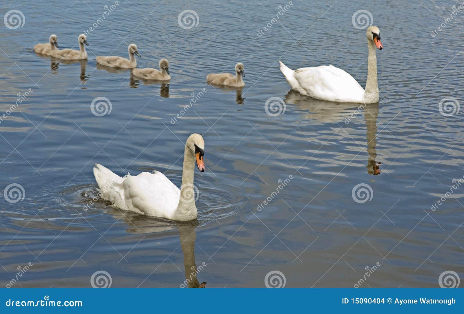 Fåglar fem uppfostrar ut signets