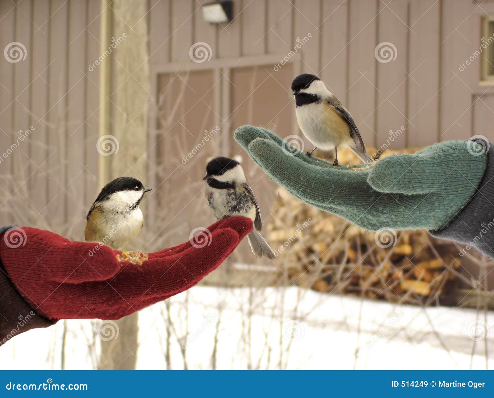 Fåglar little tre