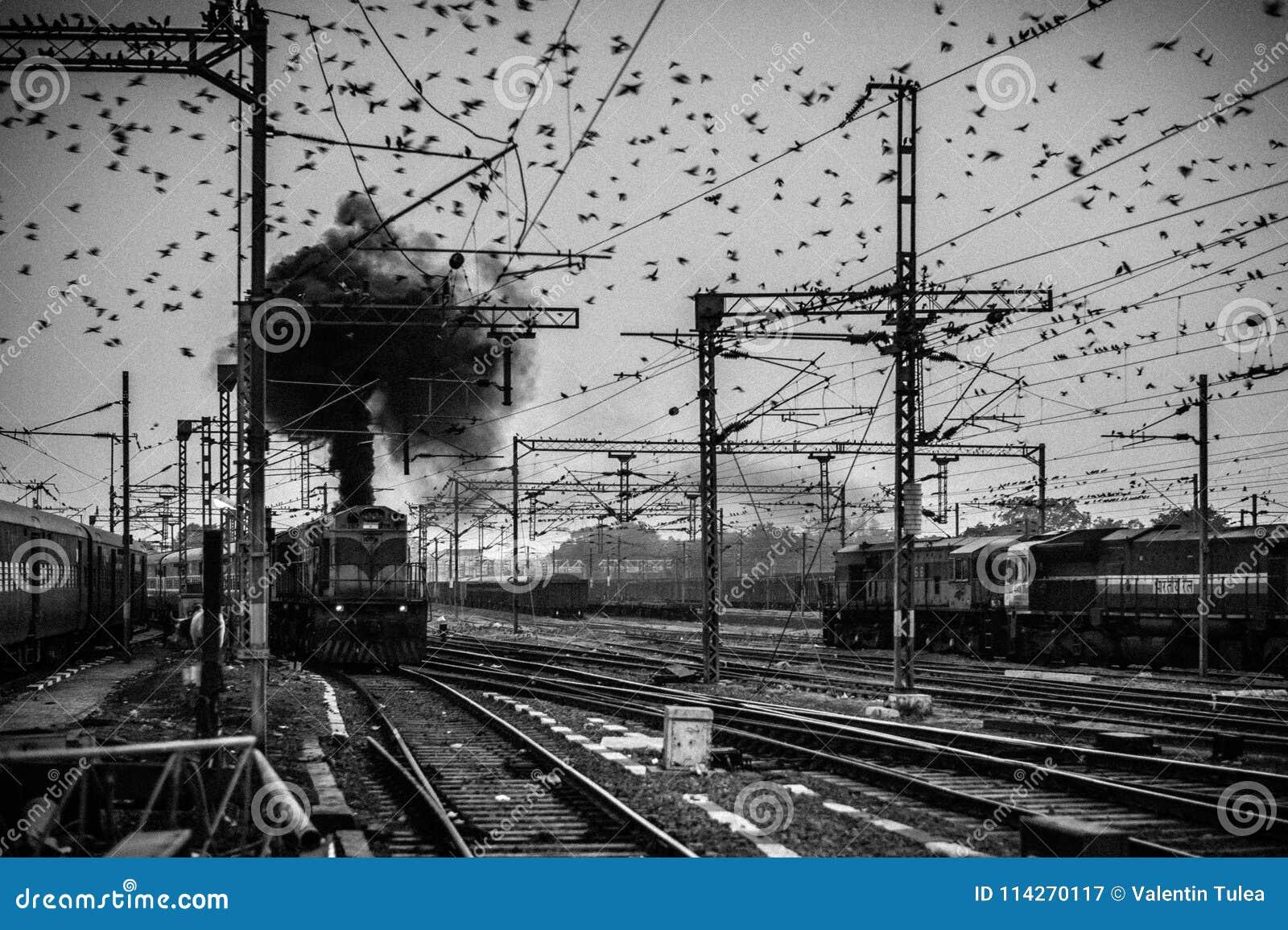 Fåglar som flockas runt om de över huvudet kraftledningarna på den Agra Cantonmentjärnvägsstationen