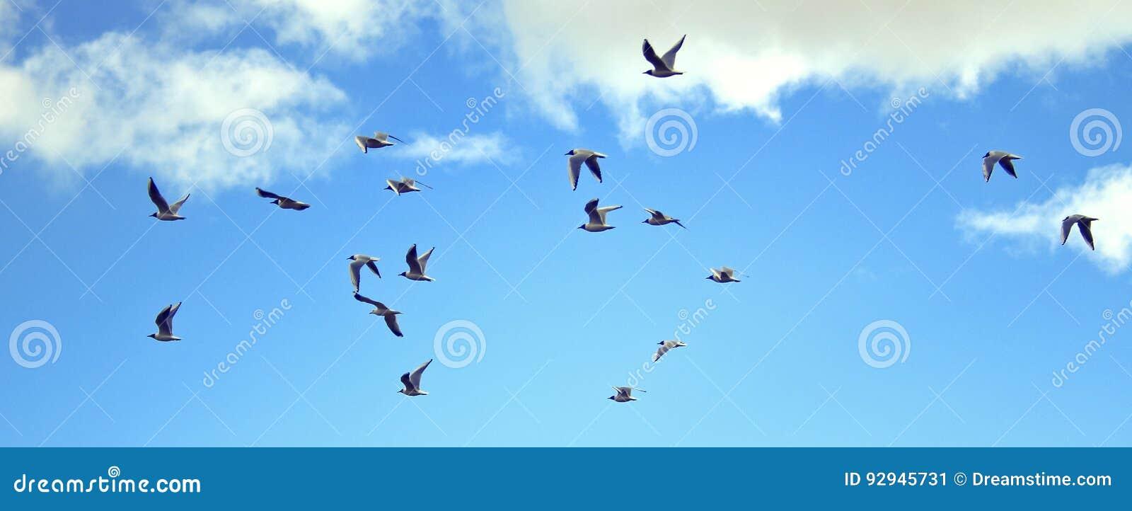 Fåglar som högt flyger