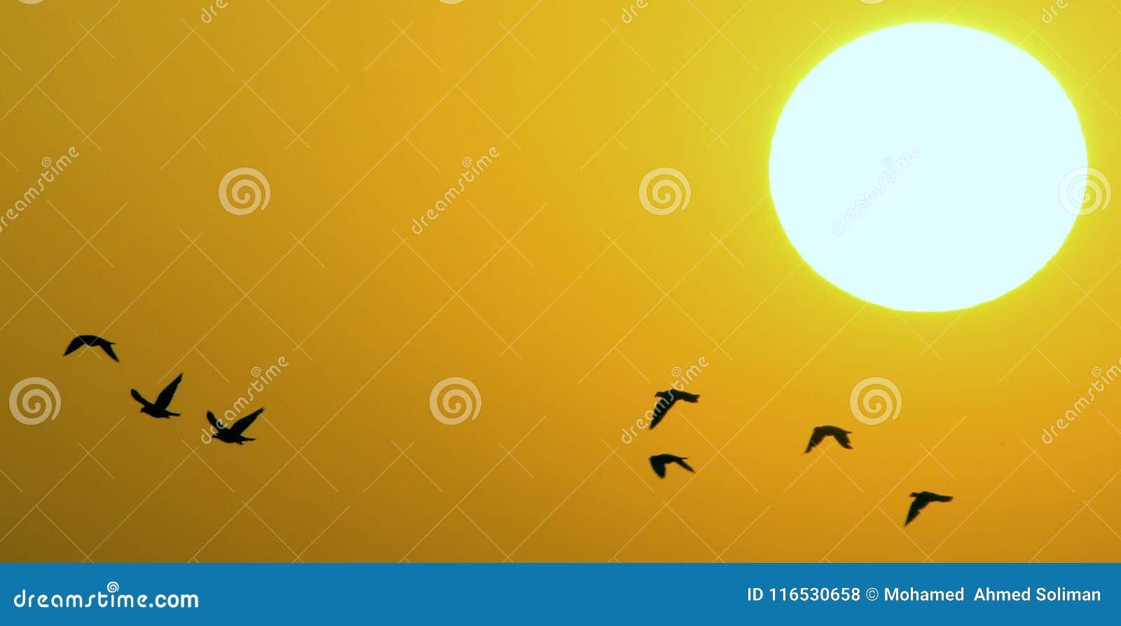 Fåglar under solnedgång