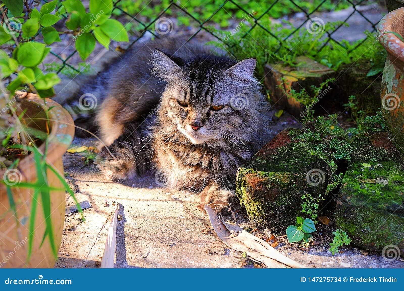 Fångade min Cat At The Small Garden att vila under The Sun