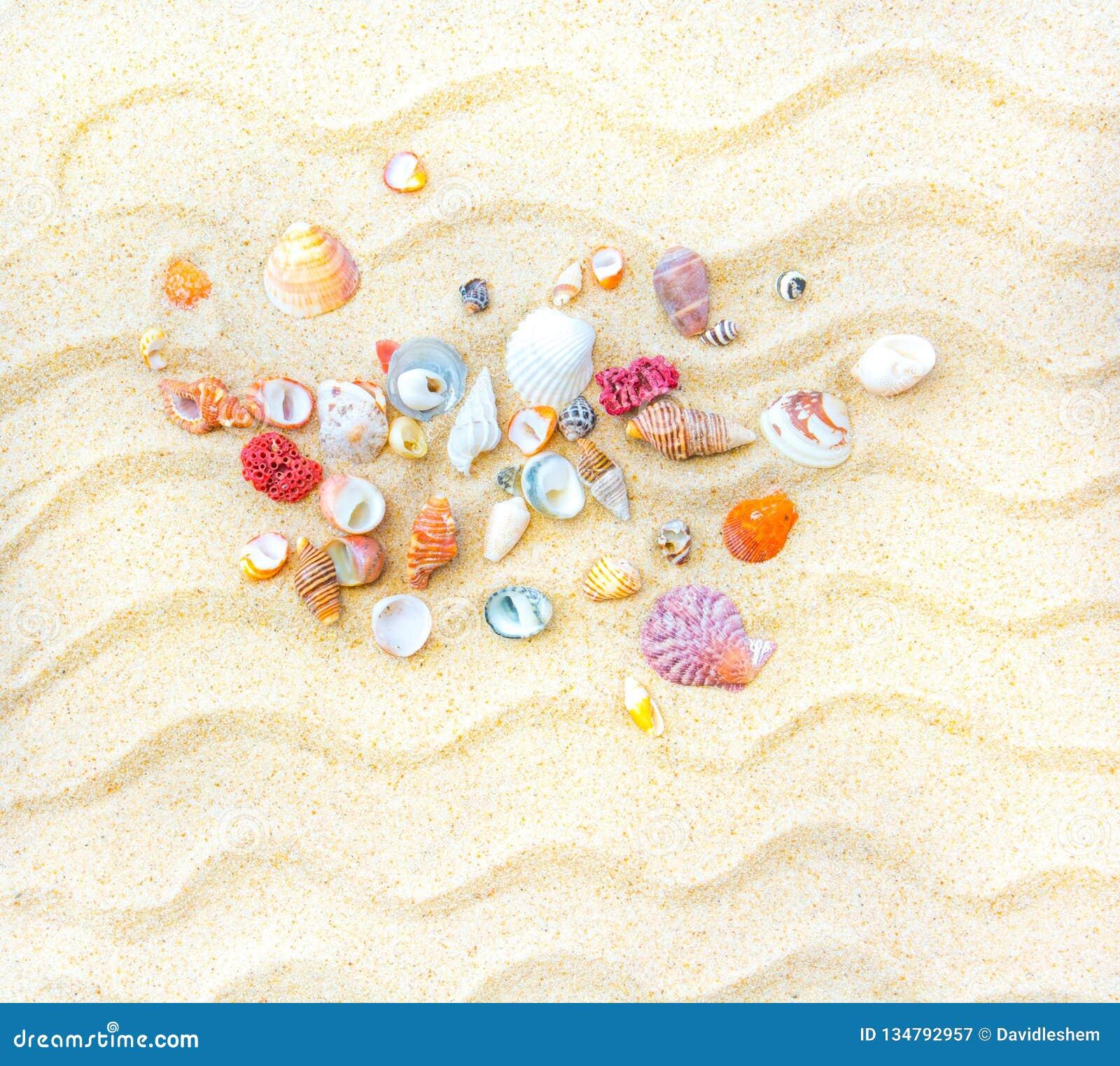 Férias, praia e escudos