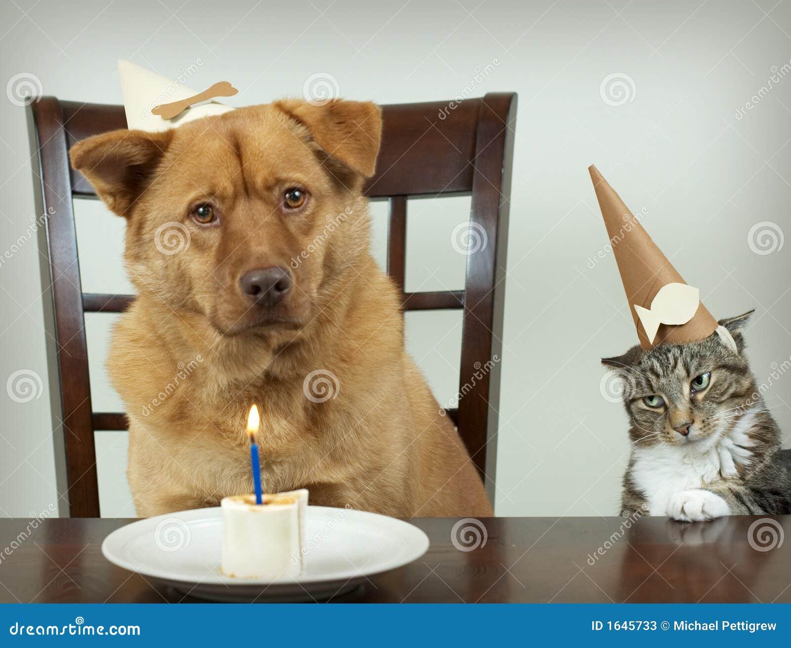 Anniversaire Animaux.Fete D Anniversaire D Animal Familier Image Stock Image Du