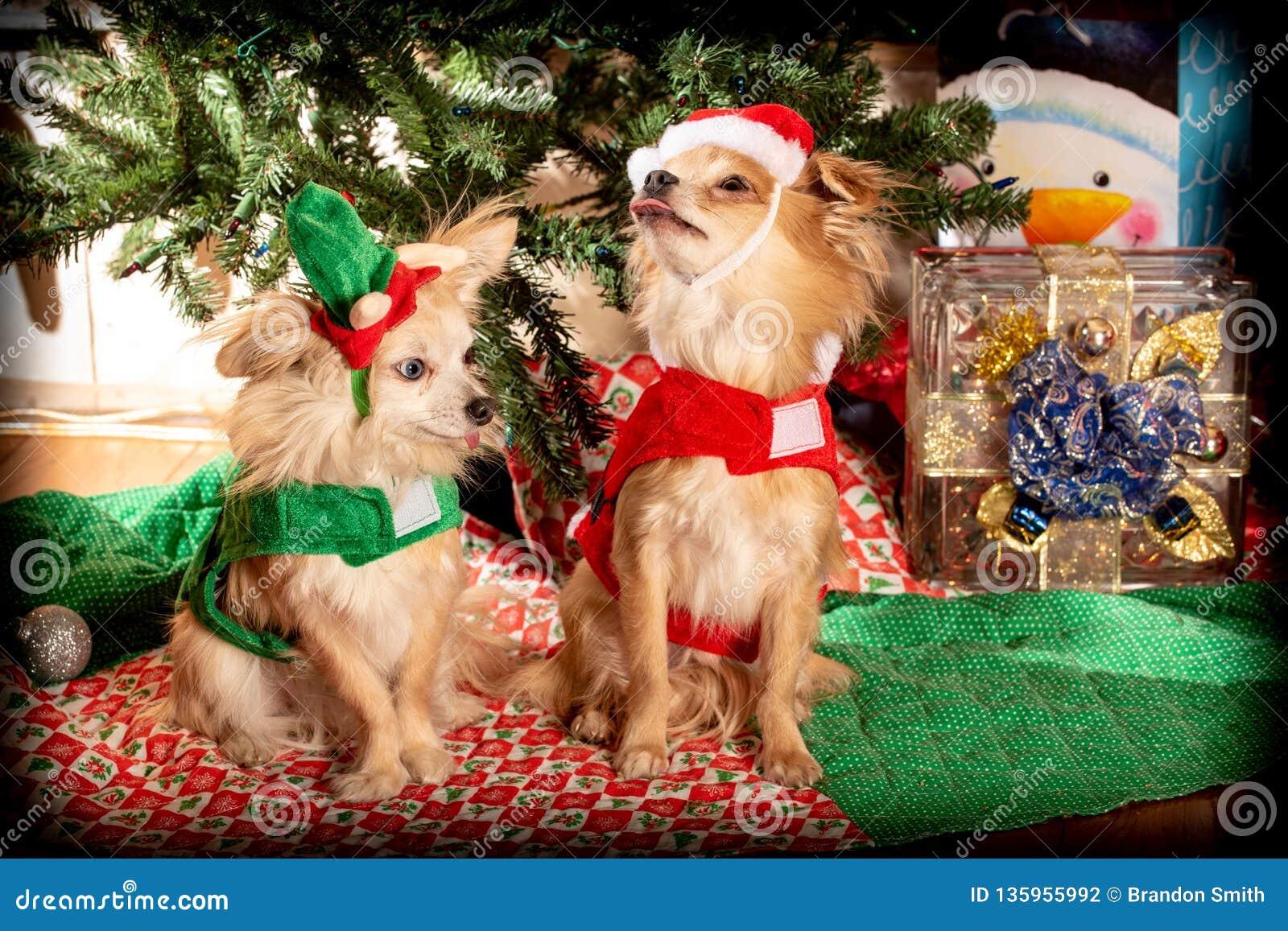 Fête de Noël de chienchien