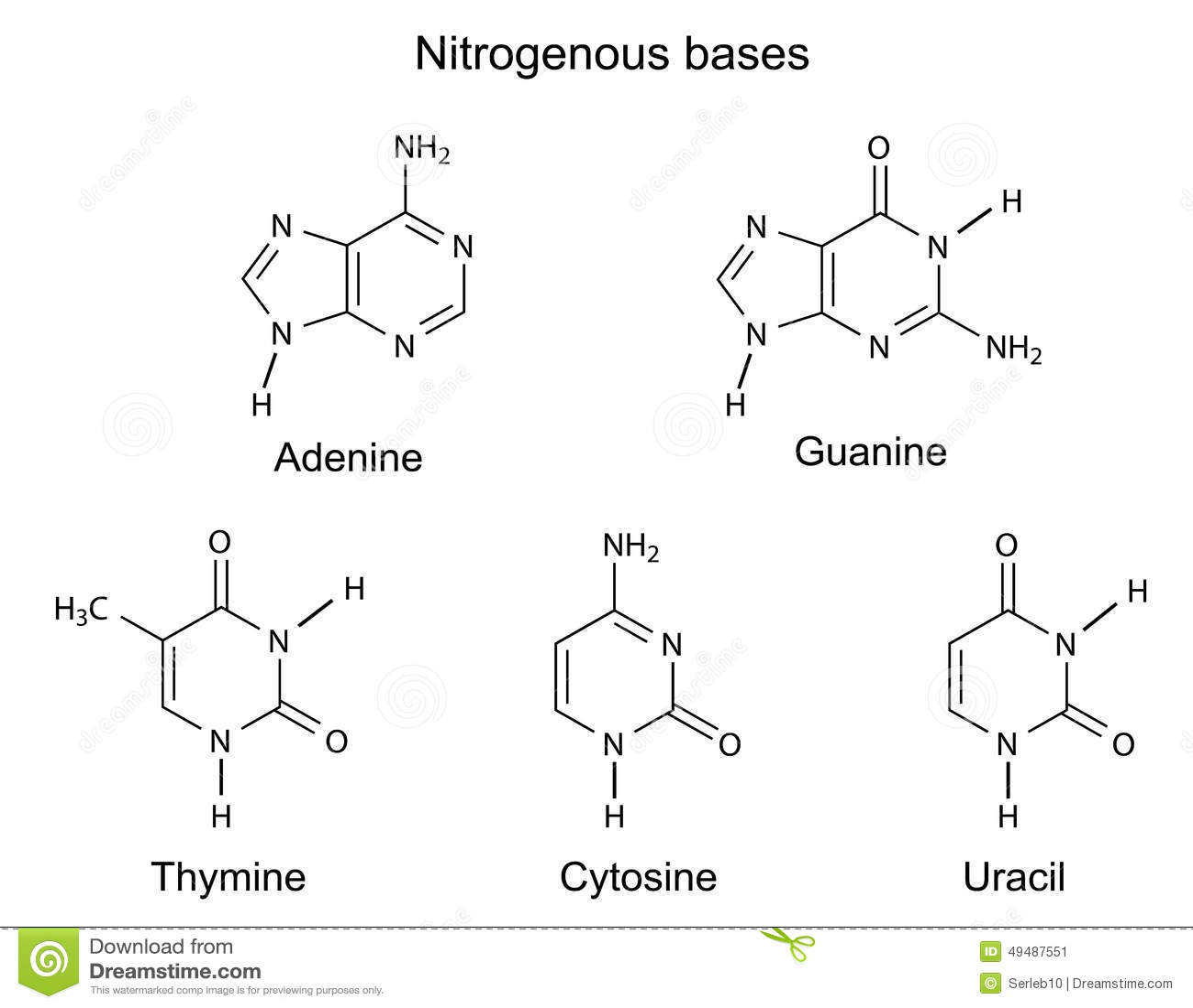Fórmulas Estructurales De Las Bases Nitrogenadas De La