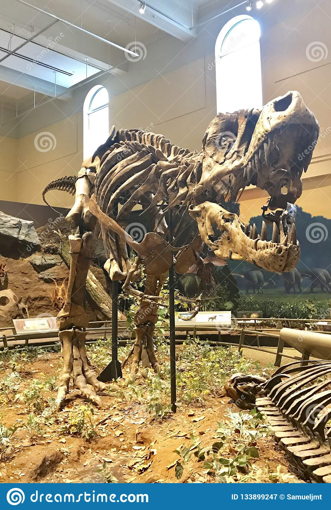 Fósil del primer tiranosaurio Rex descubierto en el mundo