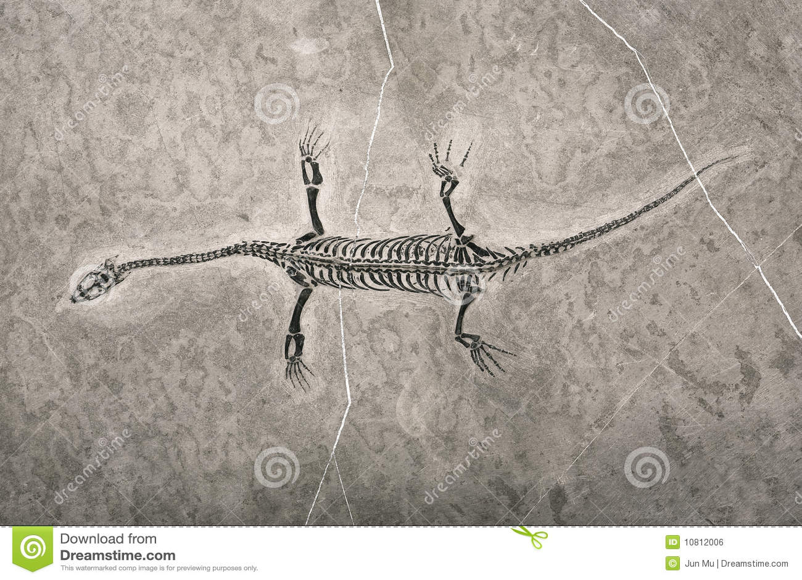 Fósseis de dinossauro