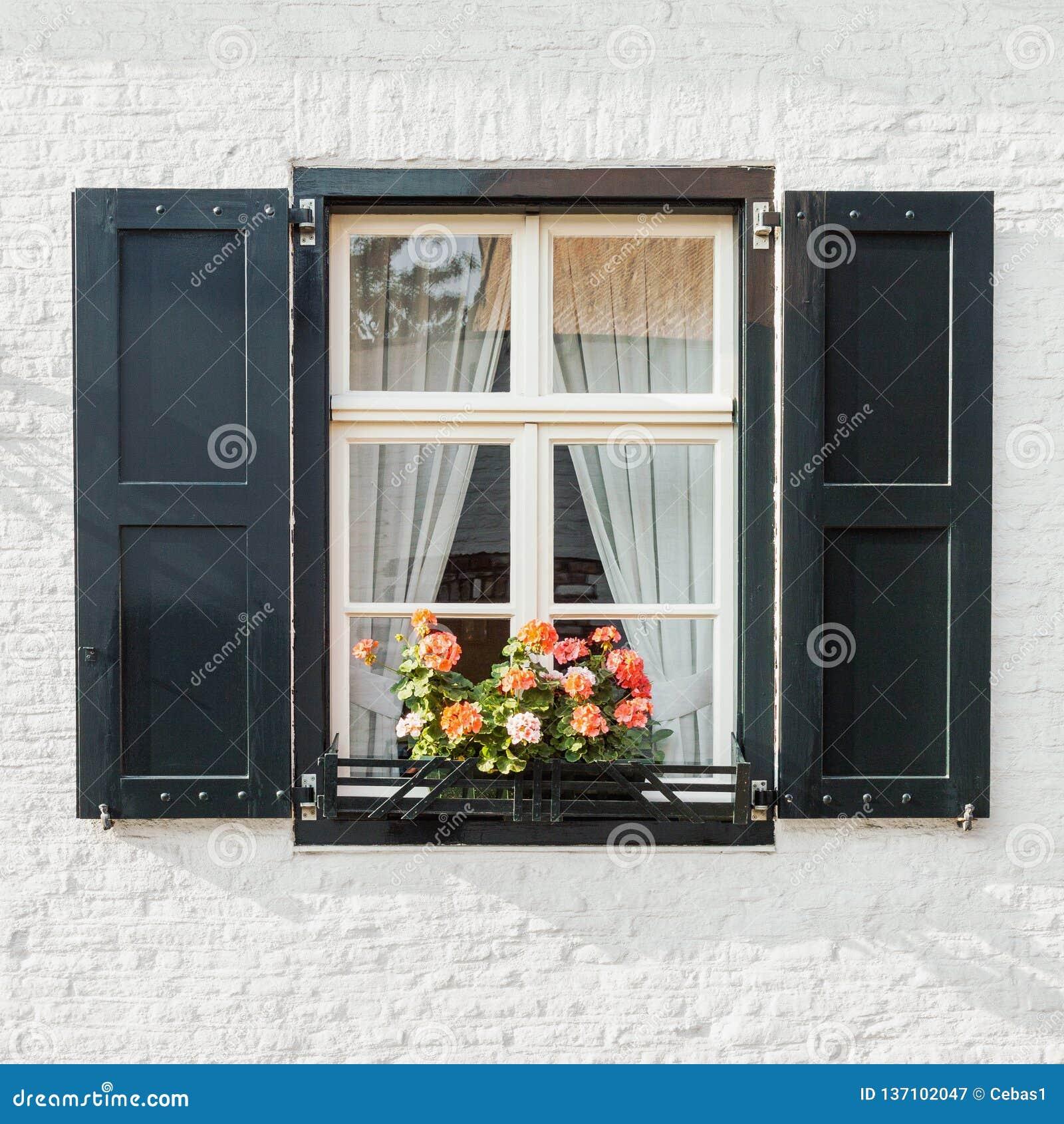 Fönster på den vita closeupen för tegelstenvägg med slutare och att blomma blommakrukan