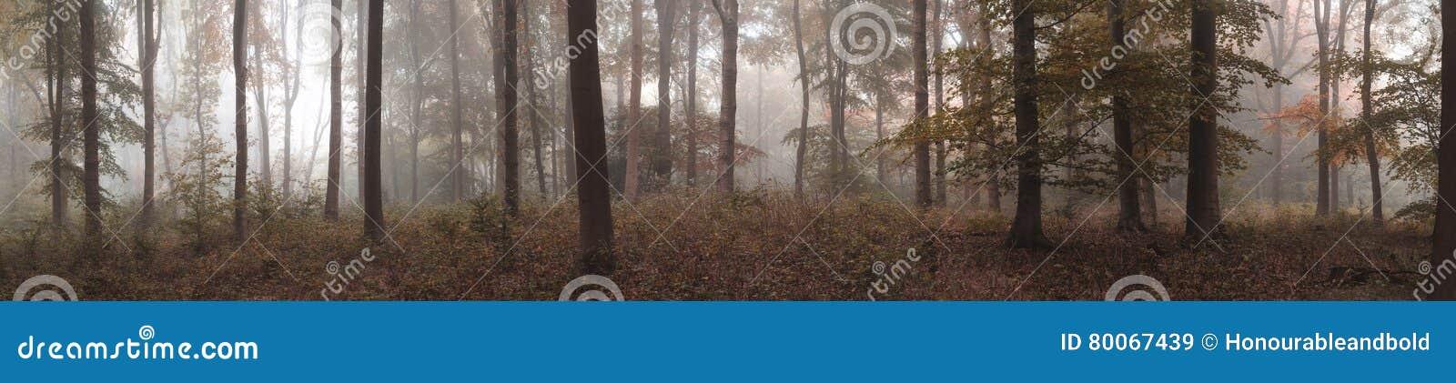 För Autumn Fall för stor färgrik panorama dimmigt landskap skog