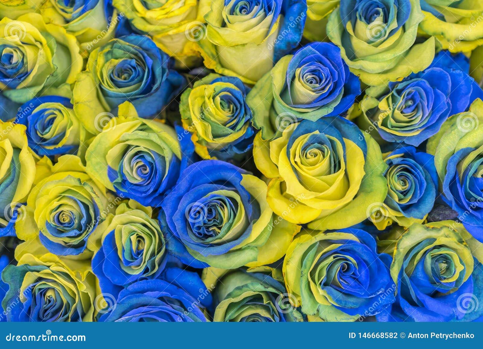 För blåa för begrepp ukrainsk bästa sikt och gula rosor Utsmyckade gula och blåa rosor fantastiska blommor Blåa och gula blommor