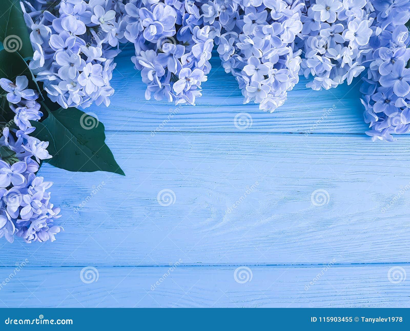 För garneringvår för härlig ny blom lila ferie för gåva för dag för mödrar för årsdag för hälsning på en träbakgrundsgräns