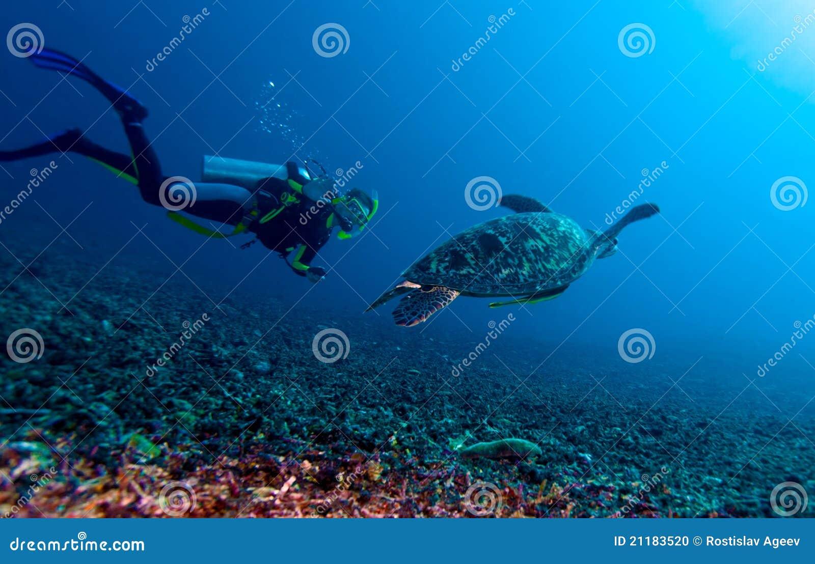 För indonesia för dykare grön sköldpadda lombok
