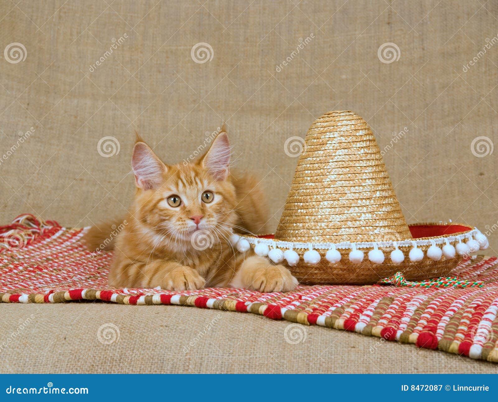 För kattungemaine mc för coon gullig sombrero red