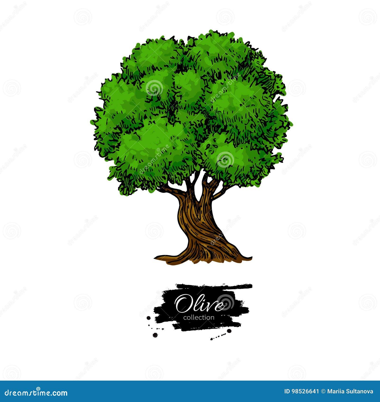 För kindtandnatt för el madrid tree för plats olive Hand tecknad vektorillustration Botanisk teckning för tappning