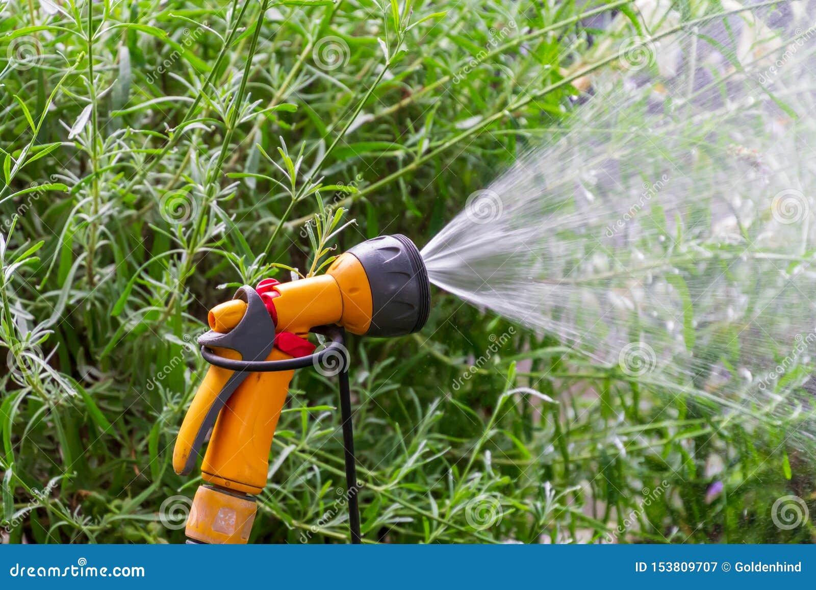 För rörbevattning för bärbar trädgård automatiskt plast- system med ett monterat duschsprejhuvud som bevattnar gräsmatta