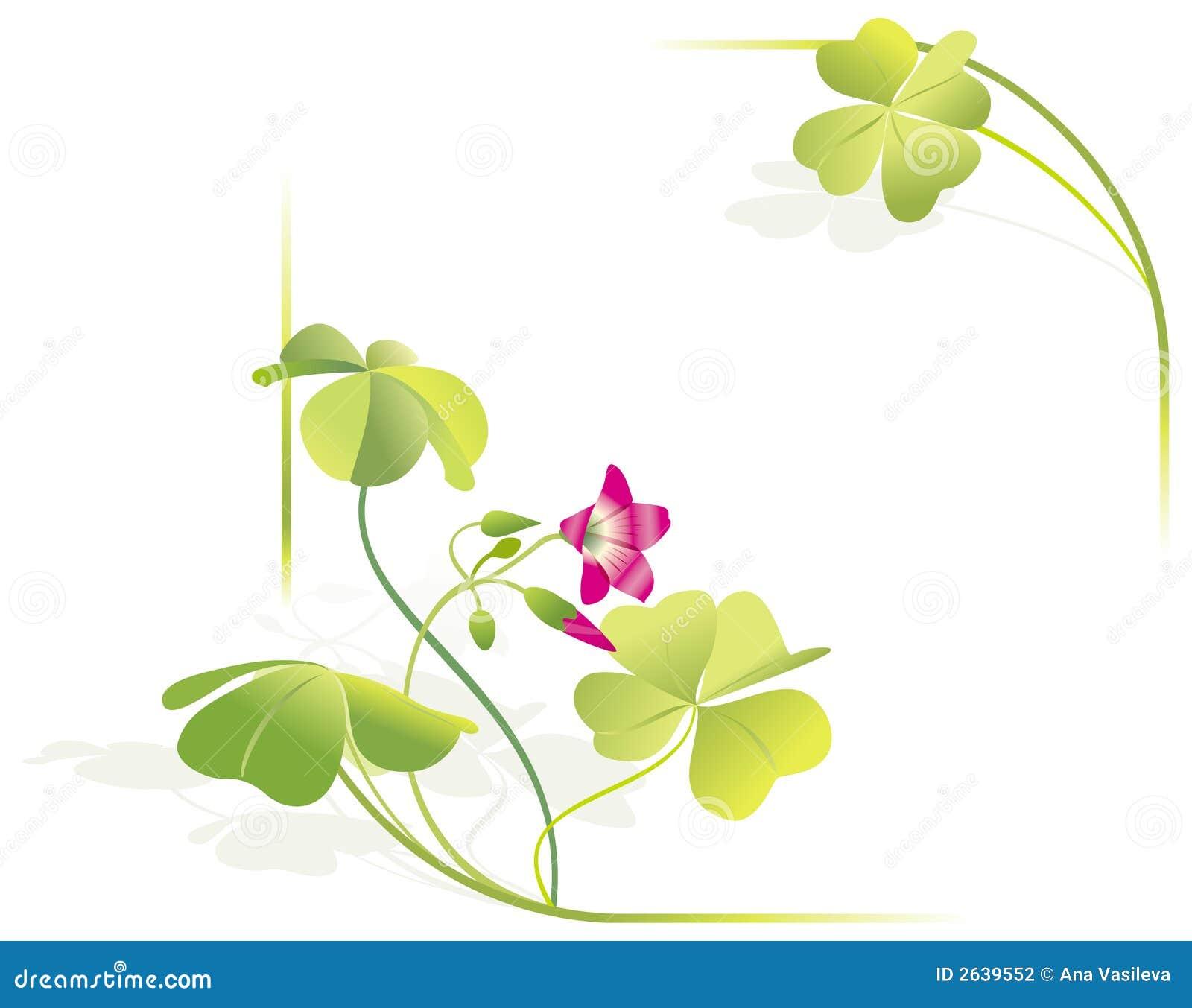 För ramleave för växt av släkten Trifolium fyra vektor