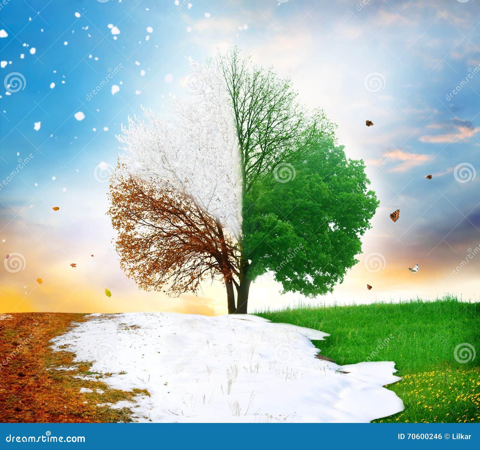 För rnwintersäsong för höst fyra tree för sommar för fjäder
