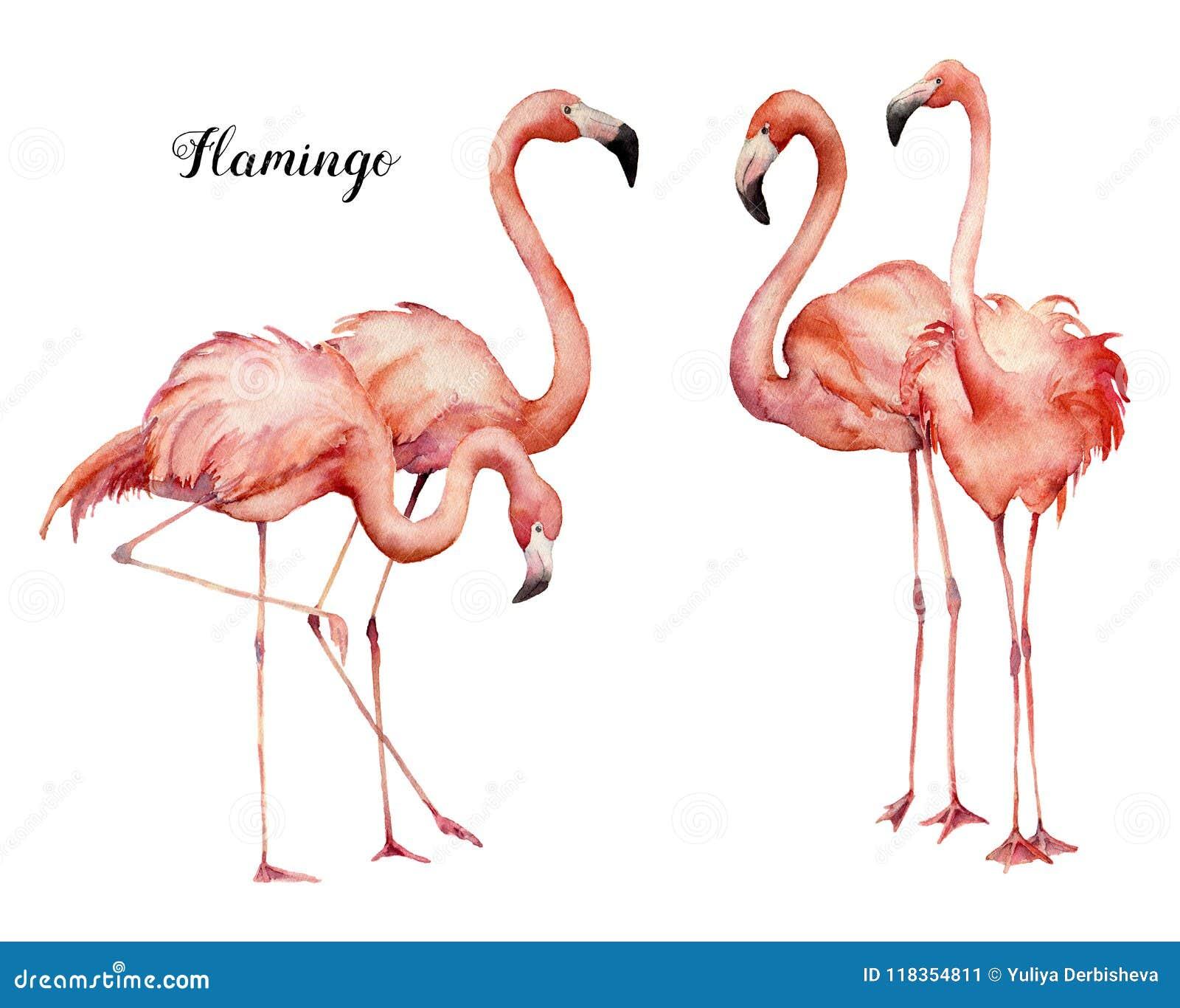 För rosa färgflamingo för vattenfärg fyra uppsättning för grupp Hand målade ljusa exotiska fåglar som isoleras på vit bakgrund wi